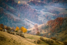 Осенняя палитра / начало ноября.  Полностью открытая диафрагма