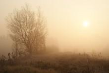 о тумане,,, / ,,,,,,,,,