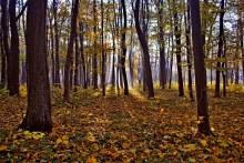 Осыпал лес багряный свой убор..... / Львов Сыховский лесопарк