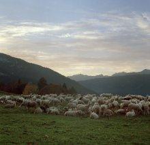 Альпийские луга / Италия, мальта Бригалина, ферма на которой производят сыр, колбасу и всякие вкусности а еще там есть ресторанчик с видом на http://photoclub.by/work.php?id_photo=25395