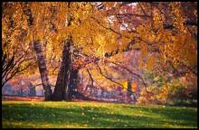 венская осень / Вена, один из городских парков