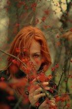 красная осень / ________