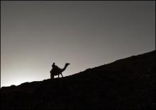 The camel... / Израиль, пустыня Негев близ Эйлата