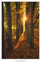 Autumn color / Набережная канала имени Москвы в районе города Дубна.Вечернее солнце.