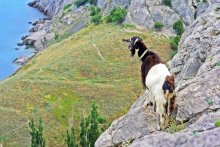 Каза-альпіністка! / Злавіла яе на адной з вяршынь Судакскіх гор (: