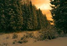 Утомленная солнцем тайга... / С наступающим Новым 2012 годом всех коллег - фотографов, профессионалов и любителей. Счастья вам, здоровья, удачи и добра!
