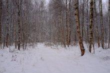 Зимний сон / **************