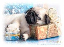 Счастье есть! / Уснуть к утру с кучей подарков - вот чего желаю всем!!!
