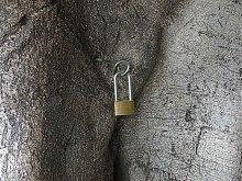 НА ЗАМКЕ... / Это- дерево:-))