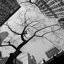 Город / и дерево