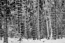 / зимний лес