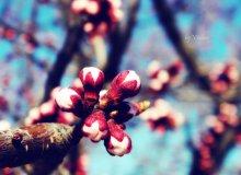 Весна / среди зимы так хочется весны((