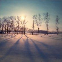 Длинные тени февраля / ******