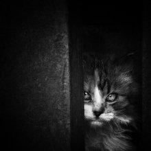 Без названия / Andrey Vahrushew