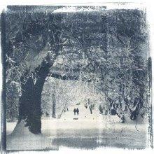 В Гатчинском парке / Цианотипия 200Х200мм, бумага офортная Somerset