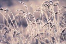 ...........Весенний сон......... / Вилия, утро...мое сегодняшнее мироощущение))))  Еще несколько  2.  [img]http://s.qip.ru/3049Bxj.jpg[/img]  3.  [img]http://s.qip.ru/1049Bxl.jpg[/img]