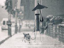 Под дождем / ..........