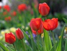 акварельный апрель / ......