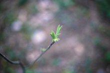 ...Пробуждение весны (мини-серия)... / Описание съемки и больше работ у меня в блоге - andrey- raduk.livejournal.co m/4279.html  Всем приятного просмотра)