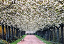 Spring / Spring has arrived at the park of the Valloires abbey.