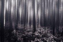 darken forest / ///