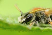 Пчёл / ...
