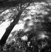 Как обнялись вода, земля и солнце / Слились и не поняли, что стали одним целым живя своей жизнью...теория хаоса во взгляде на жизнь вокруг...моя теория))))