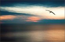 природа и птица... / Баренцево море