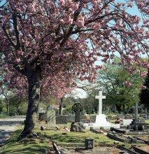 вечная весна / лондон, 2012