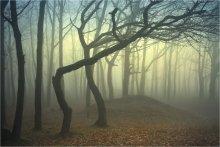 ПО ТОЛКИЕНУ: ШАГАЮЩИЙ ЭНТ / Снимок снят в туманное весеннее утро (да-да, именно в весеннее) в самом простом лесу в Солоницевке, что под Харьковом, Украина.