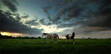 ....узды лишен и не стреножен / кони разные бывают