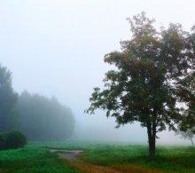 Проснись красавица / Туманное утро
