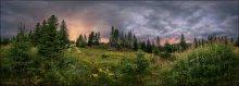 Лесной закат / Болгария. Дорога на Велинград. Недалеко от озера Доспат обнаружили в лесу огромную цветущую поляну (здесь лишь малая ее часть)... ну и встретили закат :)