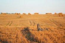 Куда уходит детство / На скошенном поле, после августовского дня, в лучах золотого закатного солнца родились острые воспоминания