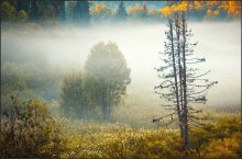 окутанные туманом... / Архангельская область