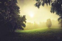 Light Fog / В ботаническом саду.