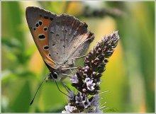 Бабочка / бабочка