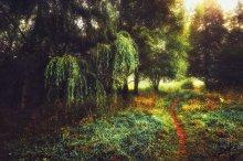 Нарисуй утро / тропинка в лесу туманным осенним утром