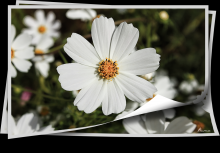/ цветы