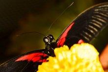 Полакомиться ... / Экзотические бабочки