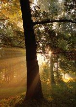 Утро в буковой роще / Туманное утро в буковой роще - зеленом оазисе в городе