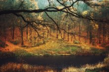 Осень в средиземье / осенний лес утром