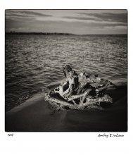 / Корни дерева, скульптурная коряга. Как будто череп в песке или старая кость - лишь память о жившем когда-то.