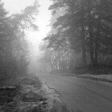 Туман / туман в лесу