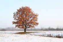 Первый снег / Первый снег