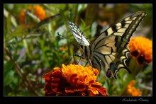 / Ну люблю я бабочек фоткать, что тут поделать ...