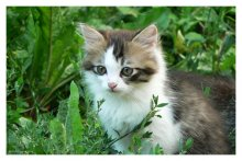 Немного из жизни котов ... / Приятного просмотра ...