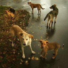 Семейный портрет / Осень настала, собаки на юг улетают