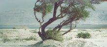 """burattino / снято в рамках встреч """"ЗЕМЛЯ ОБЕТОВАННАЯ""""  Израиль  Мертвое море октябрь 2012"""