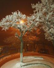 Улица красного фонаря. / Когда зима украсила деревья своим инеем.